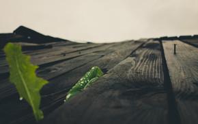 Leaves through wood