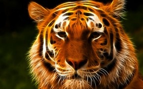 Tiger Face Art wallpaper