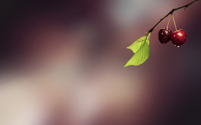 Minimal Fresh Cherries wallpaper
