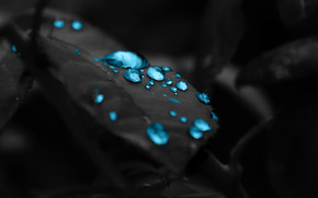 Turquoise Water Drops wallpaper