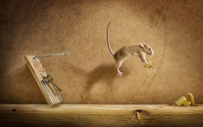 Cheese Mousetrap wallpaper