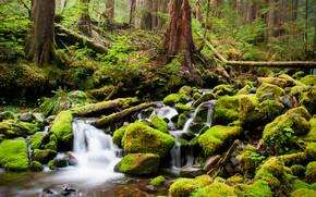 Wilde Forest