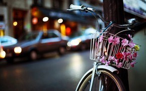 Flower Bike wallpaper