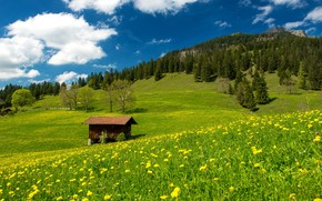 Pasture in the Bavarian Alp wallpaper