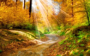 Autumn Light Over the Forest wallpaper