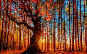 Autumn Forest Painting wallpaper