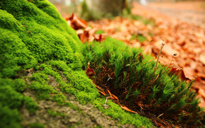 Amazing Moss wallpaper