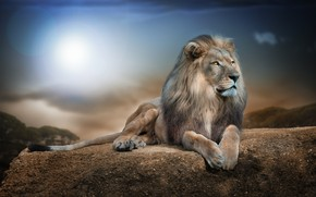Lion in Jungle wallpaper