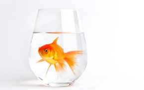 Lonely Gold Fish wallpaper