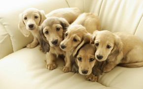 Five Cute Puppies