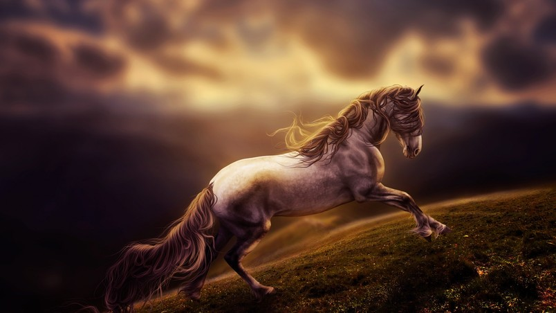 Sad young horse hd wallpaper wallpaperfx sad young horse wallpaper voltagebd Image collections