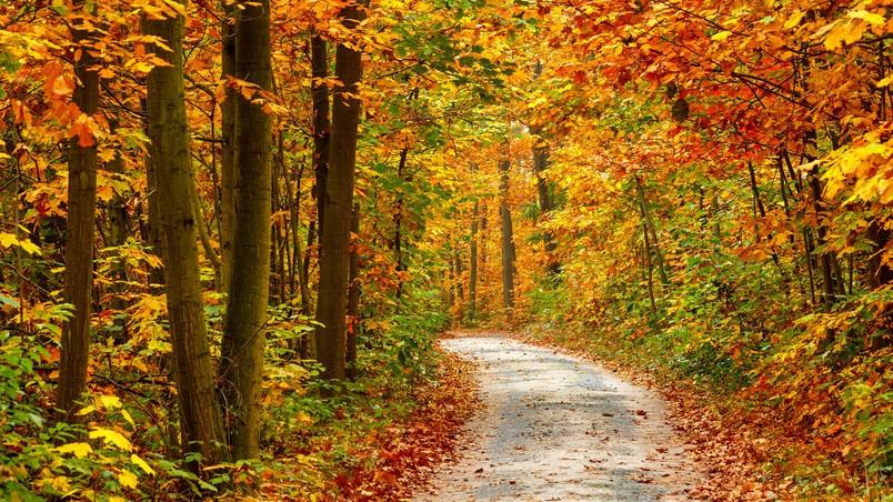 Autumn Forest Landscape Road Hd Wallpaper Wallpaperfx