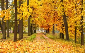 Yellow Forest Landscape wallpaper
