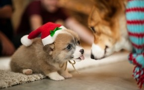 Lovely Puppy Santa  wallpaper