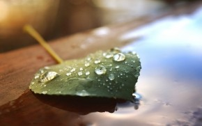 Beautiful Water Drops on a Leaf wallpaper
