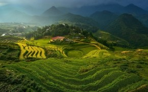 Rice Terraces in Vietnam wallpaper