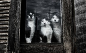 Cats Sitting at Window wallpaper