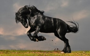 Gorgeous Black Horse wallpaper
