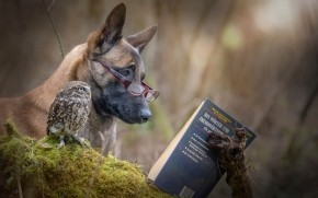 Dog and Owl Reading a Book wallpaper