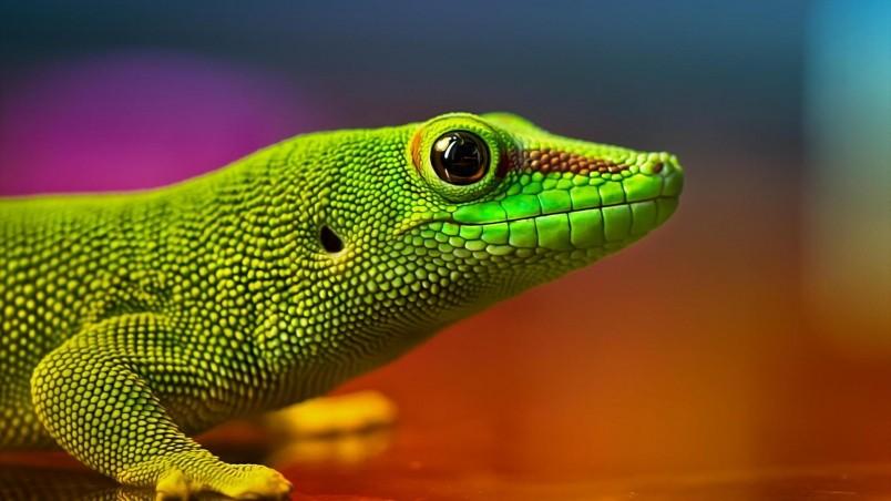 Green Lizard HD Wallpaper WallpaperFX