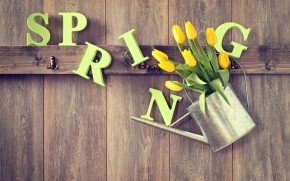 Spring Yellow Tulips wallpaper