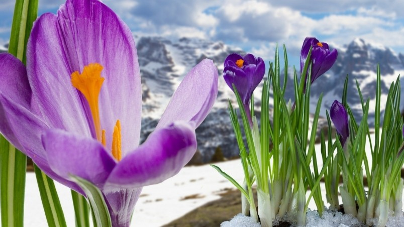 Spring Mountain Flowers wallpaper