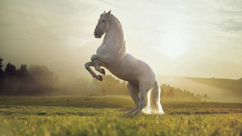 Beautiful White Horse HD Wallpaper - WallpaperFX