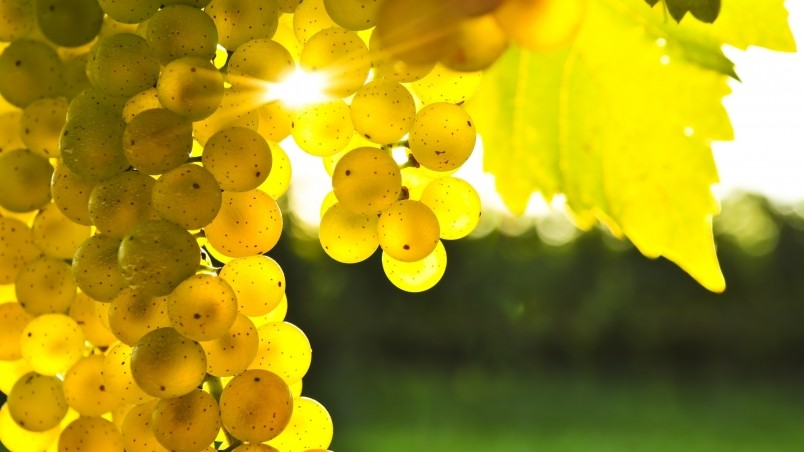 Golden Grapes wallpaper