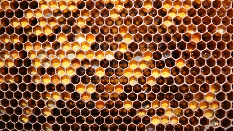 Bee Honeycomb wallpaper