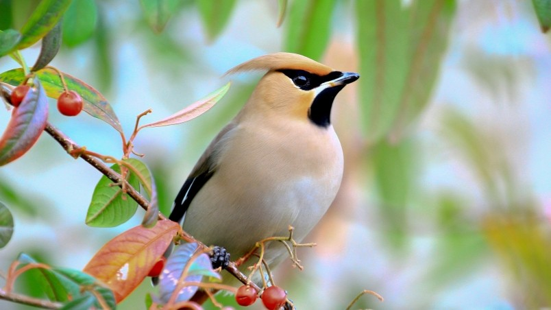 birds images hd with names animaxwallpaper com