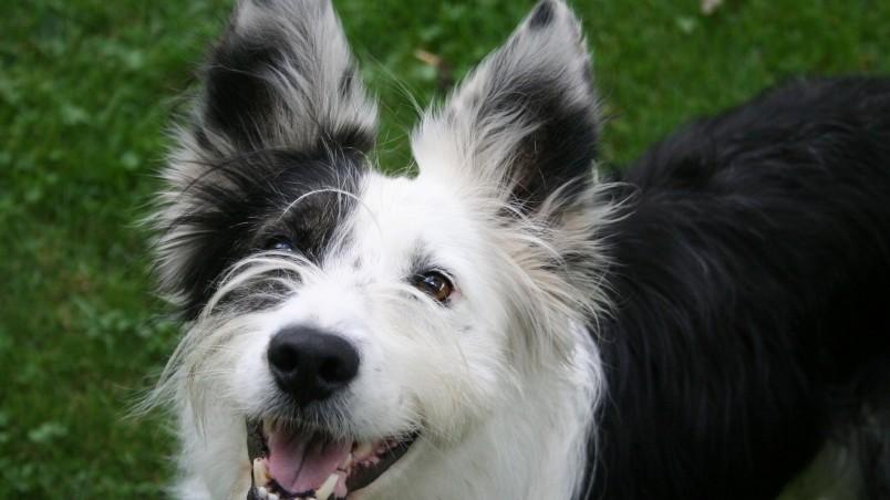 Cute Happy Dog Hd Wallpaper Wallpaperfx