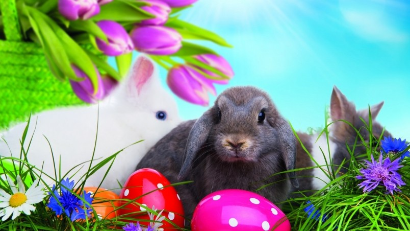 Easter Bunny Hd Wallpaper Wallpaperfx
