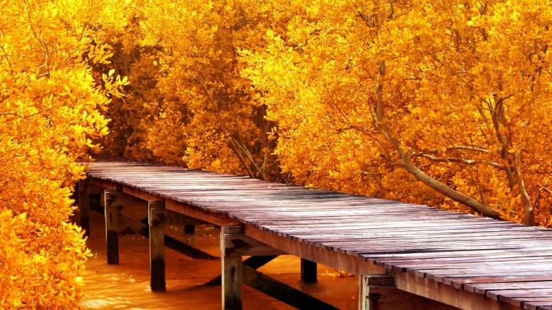 Fall Trees Wallpaper Hd