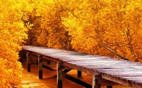 Autumn Yellow Trees wallpaper
