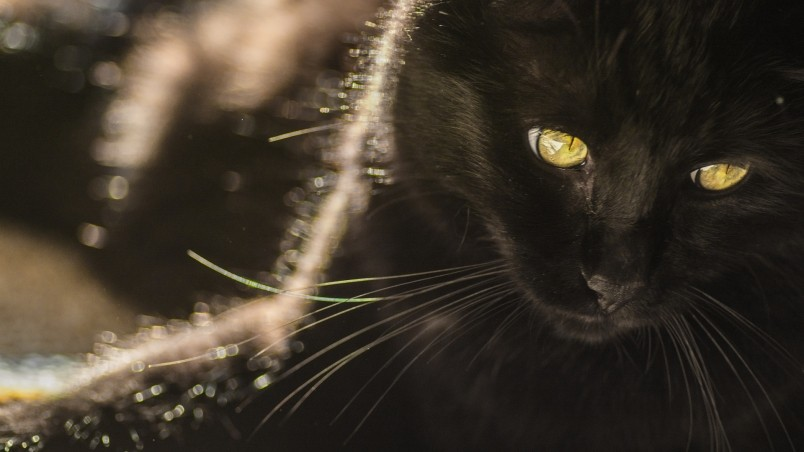 Black Cat With Yellow Eyes Hd Wallpaper Wallpaperfx
