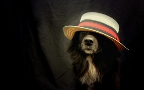 Funny Dog With Hat wallpaper