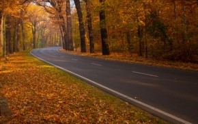 Road through Autumn Woods wallpaper