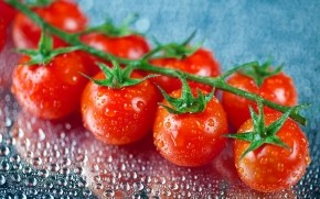 Fresh Cherry Tomatoes wallpaper
