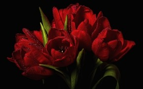 Red Tulips Bouquet  wallpaper