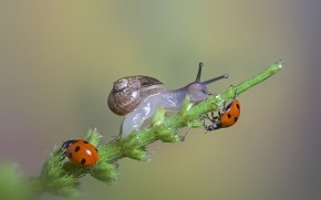 Snail and Ladybugs wallpaper