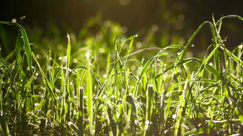 Wet Grass In The Sun  wallpaper