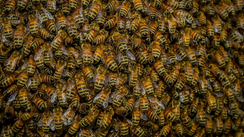Swarm of Bees wallpaper