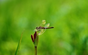 Dragonfly on Plant wallpaper