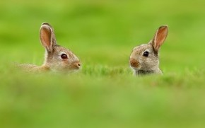 Two Cute Rabbits in Grass wallpaper