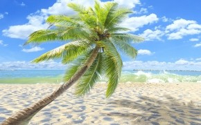 Sunny Tropical Beach  wallpaper