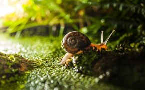 Tiny Snail on Green Grass  wallpaper