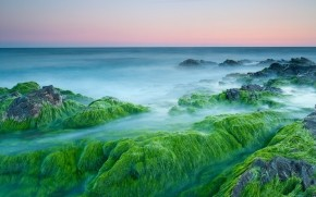 Green Algae On Rocks wallpaper
