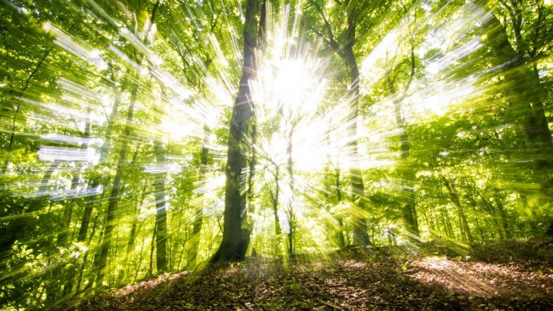 Sunny Green Forest HD Wallpaper