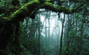 Amazing Jungle