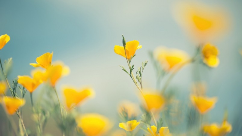 Little yellow flowers hd wallpaper wallpaperfx little yellow flowers wallpaper mightylinksfo